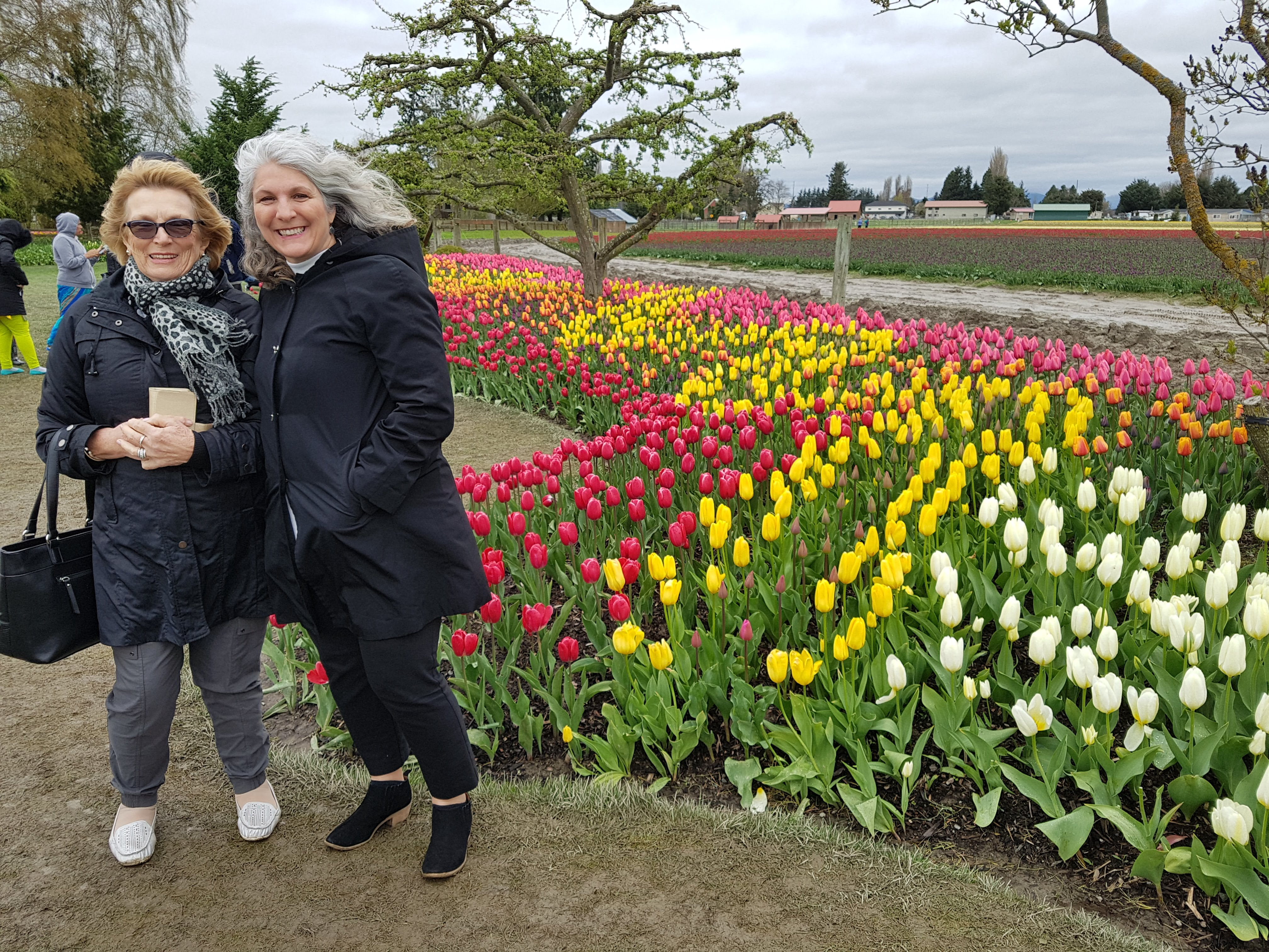 winday day tulip farm 3